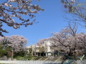 やなせ幼稚園の桜も満開で新入園児を迎える準備万端でしたが、入園式当日はあいにくの寒い雨となってしまいました。でも桜さんも、先生たちも楽しみに待っていました。元気にいっぱい遊びましょうね。